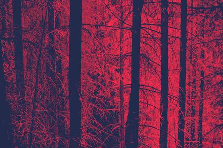 Rood afgezwakt beeld van Naakte Boomstammen in Evergreen Bos met angstaanjagende stemming, voor achtergronden Stockfoto
