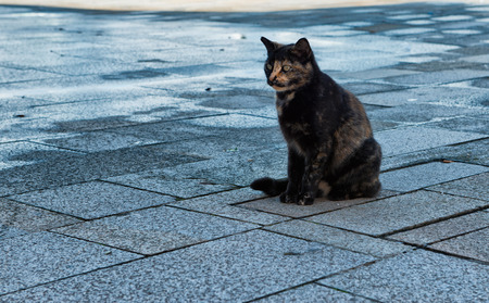 spotted fur: Emotional urban scene with an abandoned cat with black spotted fur sitting on the wet stone pavement outdoors