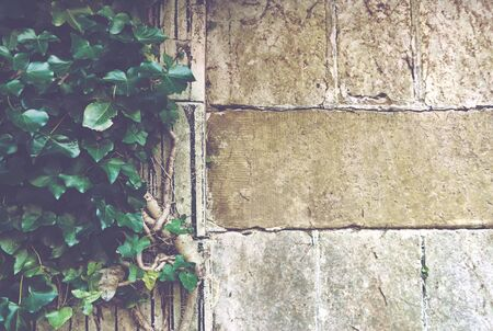 wall angle corner: Faded view of weathered and mossy medieval era stone wall close up with vines and copy space over the blocks Stock Photo