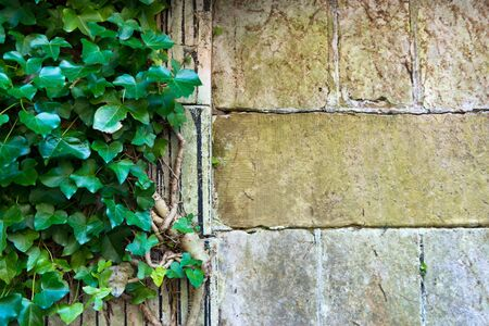 stones: Close up of weathered and mossy medieval era stone wall with vines and copy space over the blocks