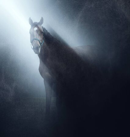 square image: Horse wearing a bridle standing in a misty shaft of light shining down through the darkness looking at the camera in a square format image