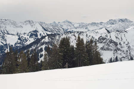 bleak: Alps mountain range and line of evergreen trees in background of ski hill