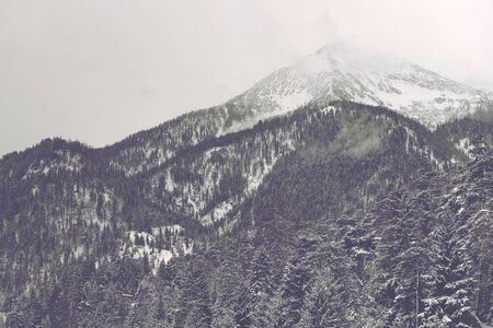 フォア グラウンドで針葉樹と曇り空の下で雪と雲で覆われて遠くの山ピーク