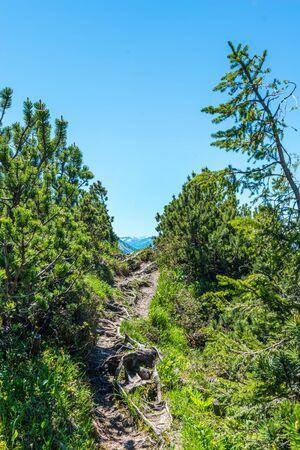 Empty rocky pass in mountain tree line surrounded by trees and shrubs under blue sky with copy space