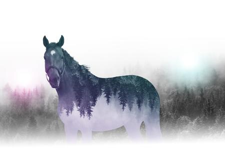exposicion: composición creativa inversa o la imagen de la doble exposición de contorno de caballo sola imagen en el espejo de los árboles con