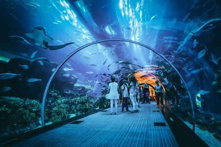 Mensen het bekijken van het zeeleven in de onderwater tunnel op de Dubai aquarium, een populaire toeristische attractie