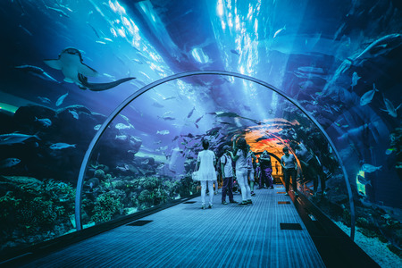 People viewing marine life in the underwater tunnel at the Dubai aquarium, a popular tourist attraction