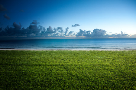 bordering: Lush green lawn bordering a tropical beach with a tranquil ocean and cumulus cloud formations on the horizon in a nature background