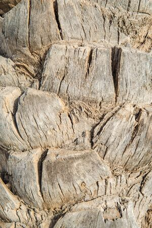 remnants: Background texture of an palm tree trunk showing the remnants of the old fronds on the bole in a full frame view Stock Photo