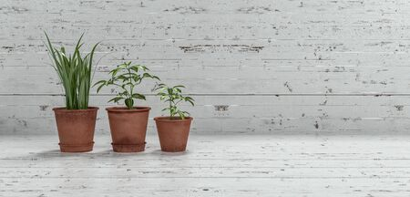 flower pot: Three potted plants arranged in descending heights on textured rustic white wood with copy space in a panoramic view. 3d Rendering. Stock Photo