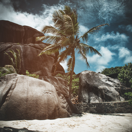 Palm tree and rocks on a tropical beach with toning and vignette giving an artistic storm effect in a square format Stock Photo