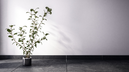 Large spindly houseplant in empty room on dark floor and blank white wall. Includes copy space. Stock Photo