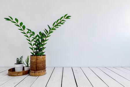 Drei grüne Topfpflanzen auf einem weiß lackierten Holzboden gegen eine weiße Wand in einem niedrigen Winkel. 3D-Rendering Standard-Bild