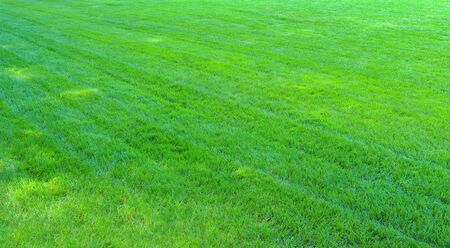 the well groomed:    Green grass  Natural background