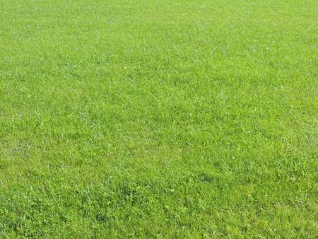 well maintained: Grass green background. Green Lawn. Green grass.