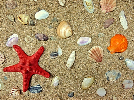 Red starfish lying on the beach sand with shells. photo