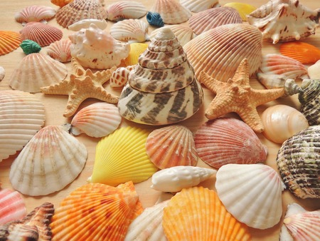 echinoderm: Bright colored sea background of seashells and starfish on a wooden surface.