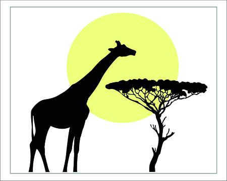giraffe silhouette: Black giraffe silhouette wild life of African Savannah on a white background isolated. Illustration