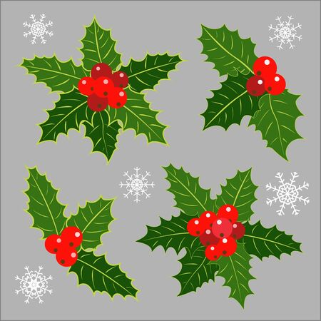 Christmas decoration Holly leaves collection.