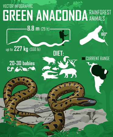 anaconda: vector jungle Green anaconda infographic