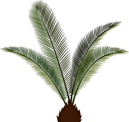 subtropics: vector palm tree