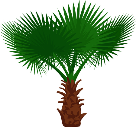 vector palm
