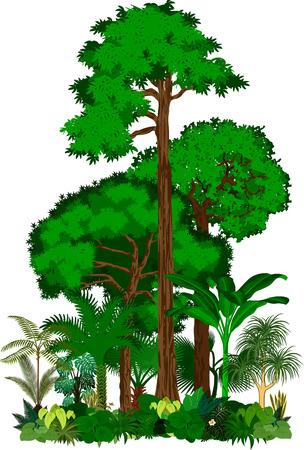Rainforest vector illustratie. Vector Green Tropical Forest jungle