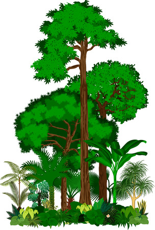 Regenwald-Vektor-Illustration. Vector grünen tropischen Wald Dschungel
