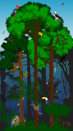 cougars: Rainforest vector illustration. Vector Amazon Tropical Forest jungle with Trees and animals
