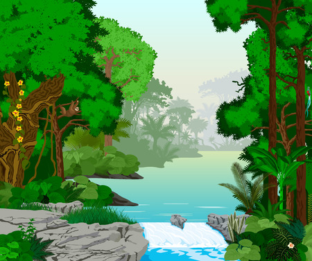 lake in jungle rainforest