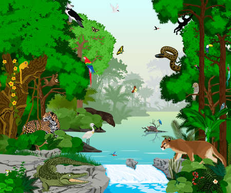 rainforest: beautiful lake in jungle rainforest with animals