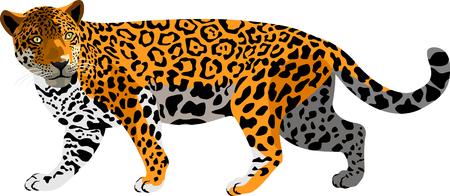 isolated jaguar