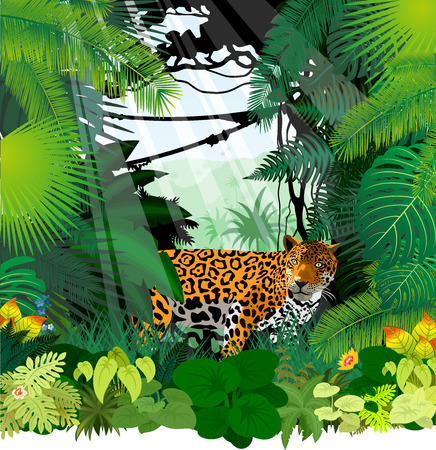 Leopard in Jungle Rainforest