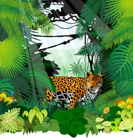 Leopard in Jungle Rainforest