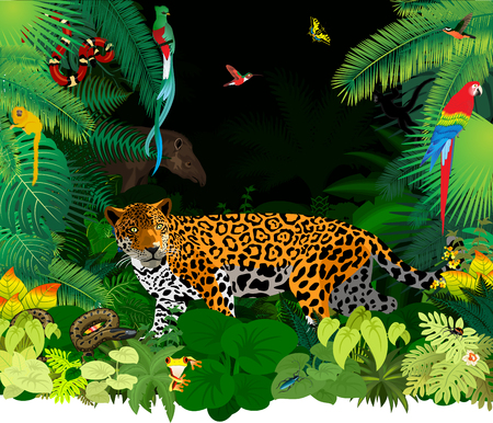 regenwoud jungle met jaguar, tapir en differend dieren Stock Illustratie