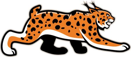 wildcat: isolated lynx Wildcat mascot illustration Illustration