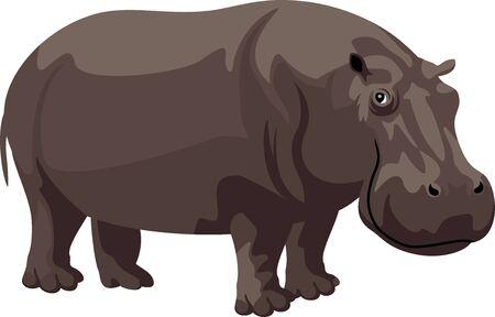 hippopotamus: ilustración de dibujos animados hipopótamo