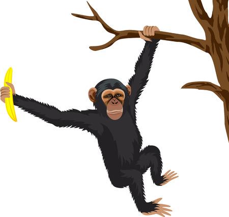 ape: ape chimpanzee Illustration