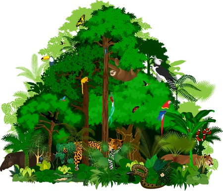 treefrog: Rainforest illustration. Green Tropical Forest jungle