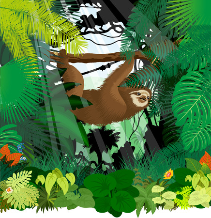 Sloth in jungle rainforest