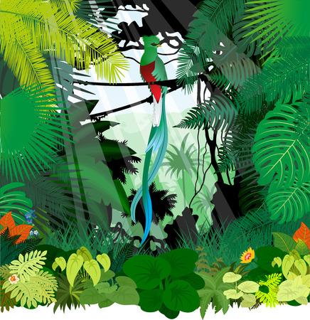 South American quetzal in jungle rainforest