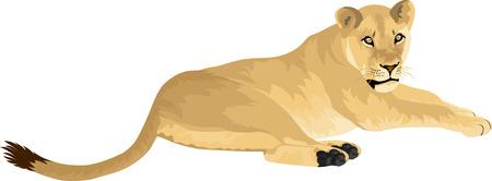 vector Female lion Lioness - Panthera leo Illustration