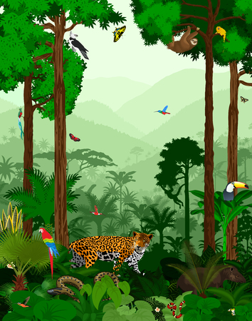 sloth: Vector Jungle Rainforest with different animals