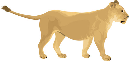lioness: Female lion Lioness - Panthera leo