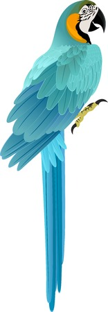 macaw: parrot Blue and yellow Macaw Illustration