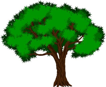 rainforest tree: tropical jungle rainforest tree Illustration