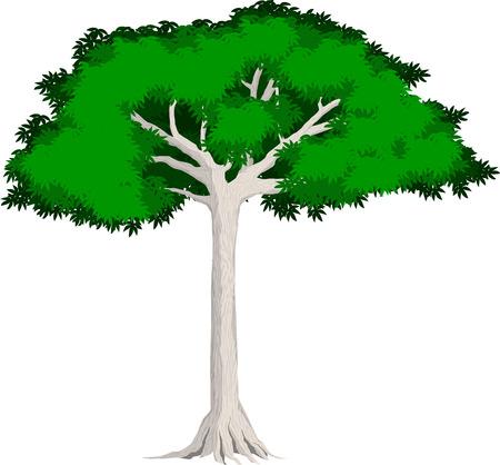 tropical tree: tropical jungle rainforest Kapok tree
