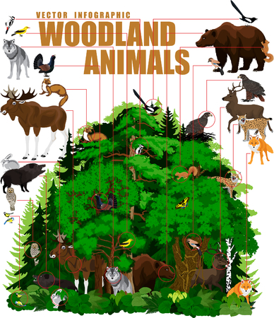 marten: infographic - north woodland forest with animals