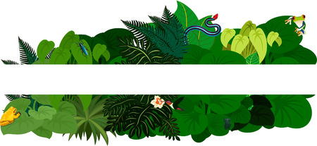 amphibian: Tropical jungle rainforest foliage. Floral design background -illustration