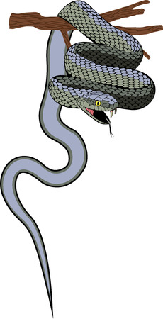 adder: viper snake Illustration